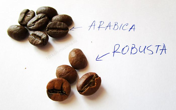 Арабика и робуста: сравнение зерен на фото, отличия
