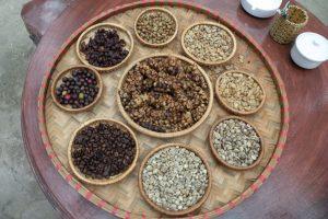 Все стадии производства кофе Копи Лювак