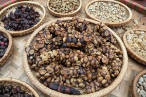 Экскременты с зернами кофе лювак