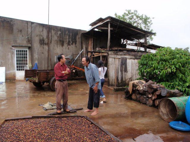 Ферма и станция обработки кофе во Вьетнаме